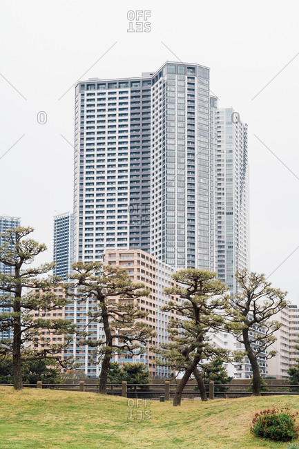 Large Bonsai trees in park, high-rise buildings in background, Tokyo, Japan