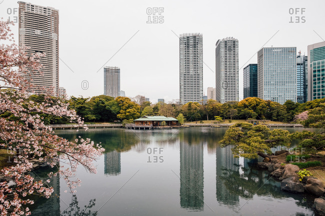 Cherry blossom trees by lake, high-rise buildings in background, Tokyo, Japan