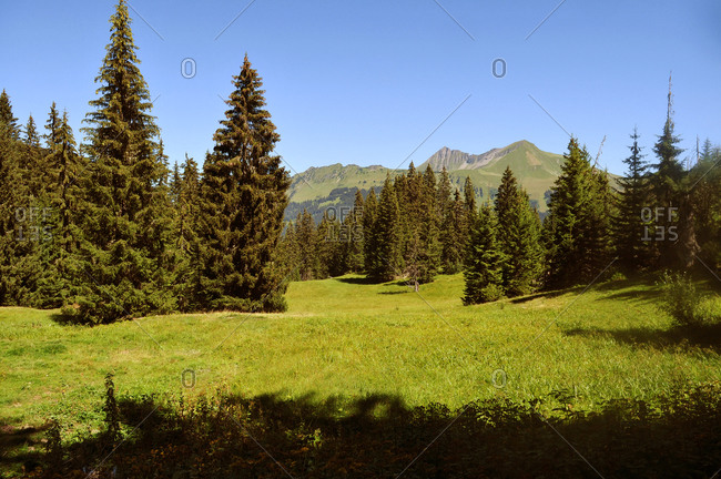Switzerland, Bern canton, Hight-Simmental region, Pastures on Wispile, hiking to Lauenen valley and lake