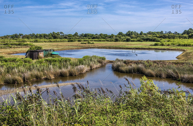 "France, Gironde, Arcachon Bay, Gujan-Mestras, salt marshes of La Hume and a trapper's hut for duck hunting (also called ""tonne"" in French)"