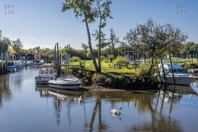 France, Gironde, Arcachon Bay, river port of Biganos on the Leyre river, mute swans