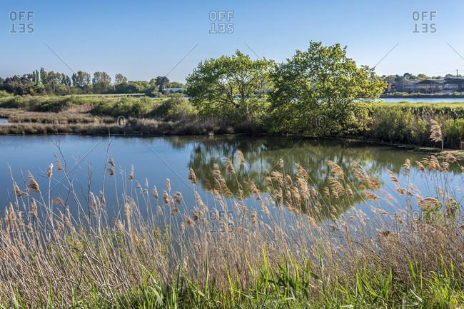 France, Gironde, Arcchon Bay, salt marshes of the Teste at Port du Rocher