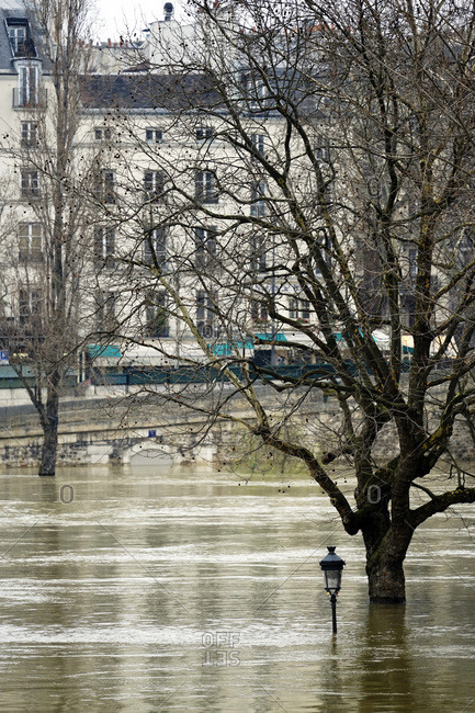 Europe, France, Ile de France, Paris, the Seine overflowing in January 28th 2018, a tree and a lamp post submerged by water at l'ile St Louis