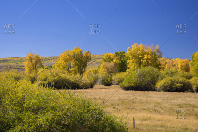 USA, Wyoming, autumn landscape, aspens