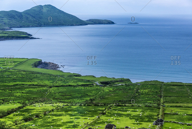 Republic of Ireland, County Kerry, Iveragh Paninsula, Ring of Kerry, agricultural landscape by the sea