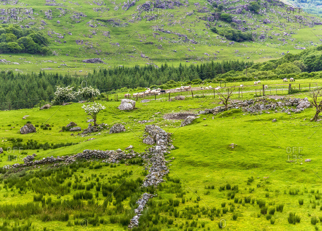 Republic of Ireland, County Kerry, grasslands in the Killarney National Park