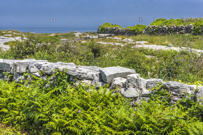 Europe, Republic of Ireland, County Galway, Aran Islands, Inishmore Island, low walls made of dry stone
