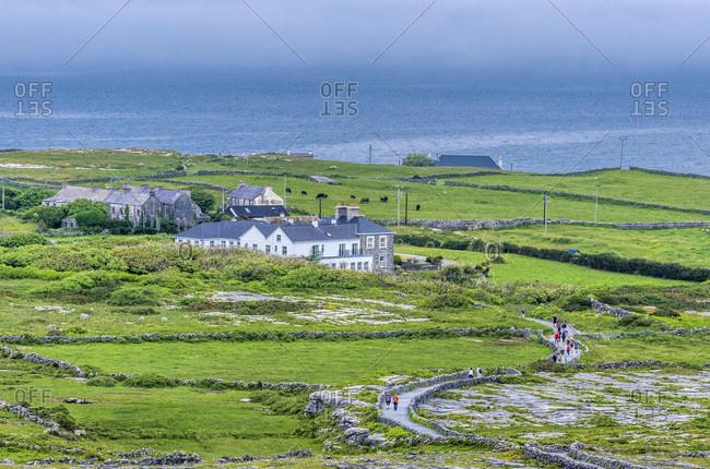 Europe, Republic of Ireland, County Galway, Aran Islands, Irishmore island, heathland near the prehistorical site of the Ringfort of Dun Aengus (Aonghasa) (1100 BC, 800 AC)