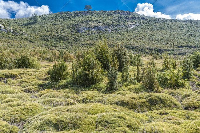 Spain, autonomous community of Aragon, Sierra y Canons de Guara natural park, landscape and plateau of the Mascun canyon, bushes of gorse and boxwood