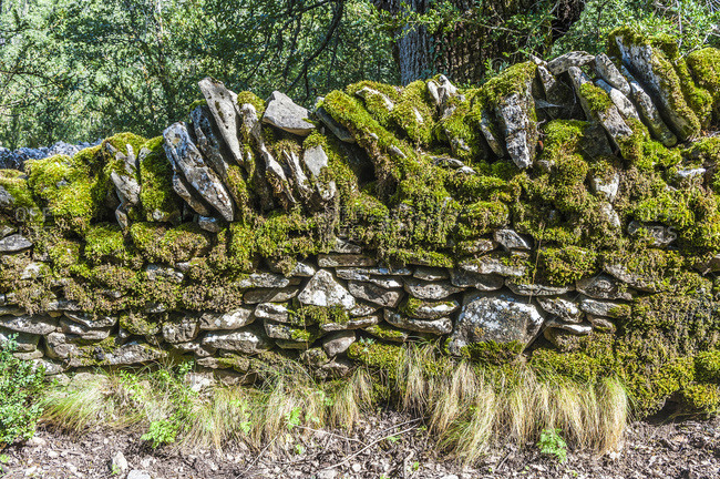 Spain, autonomous community of Aragon, Sierra y Canons de Guara natural park, plateau of the Mascun Canyon, low wall in dry stones