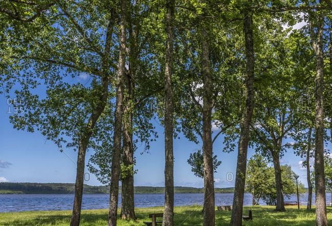 France, New Aquitaine, Landes, Leon, poplar on the bank of Leon lake