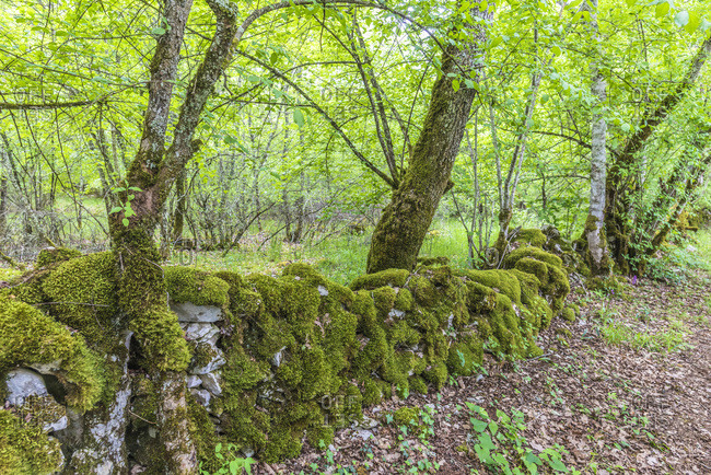 France, Lot, Causses regional Natural Park of Quercy, Natural Sensitive Space of Brauhnie, small stone wall in a ewes park