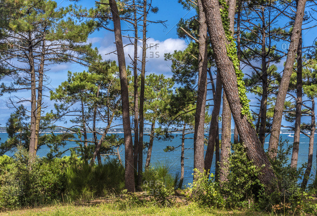 France, Arcachon Bay, dune with trees above the Perieire beach at Arcachon