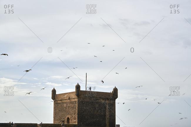 Essaouira, Morocco - November 8 2017: Birds flying over Castelo Real of Mogador