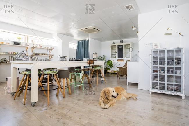 Dog relaxing on hardwood floor in cooking school