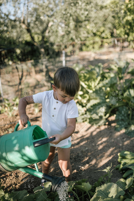 Cute boy watering plant in farm with can