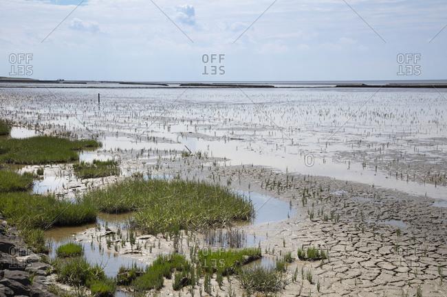 Germany- Lower Saxony- Salicornia growing in Wadden Sea National Parks