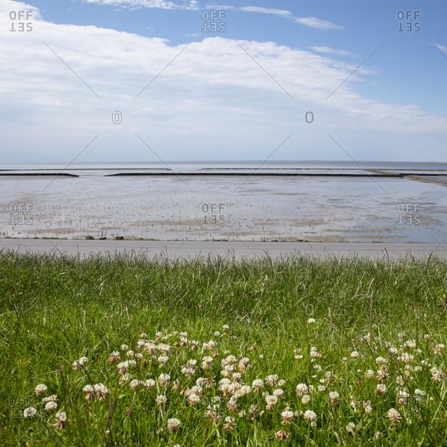Germany- Lower Saxony- Norddeich- Low tide in Wadden Sea National Parks