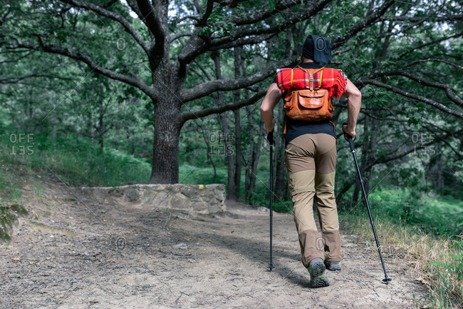 Back view of unrecognizable male traveler with backpack and trekking poles walking along sandy road in woods during holiday