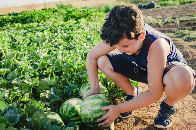 High angle positive preteen boy choosing ripe watermelon in green garden in summer day in countryside