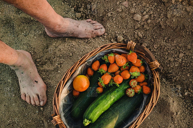 Top view of crop unrecognizable barefoot person standing on soil near basket filled with freshly harvested ripe strawberries and green zucchini with tomato