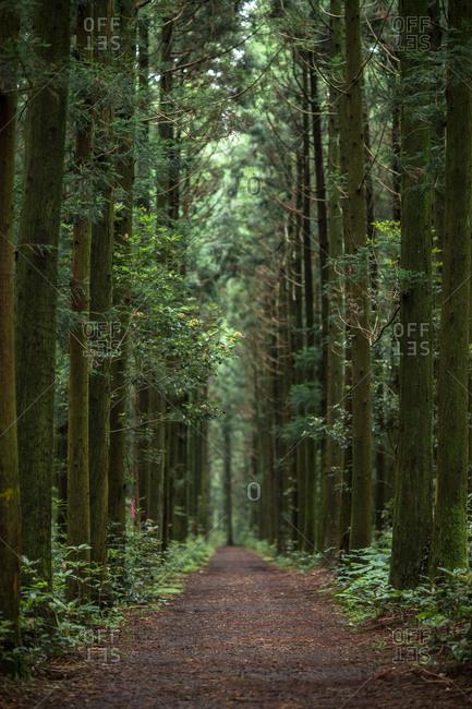 Path through dense forest on Hallasan Mountain, Jeju Island, Korea