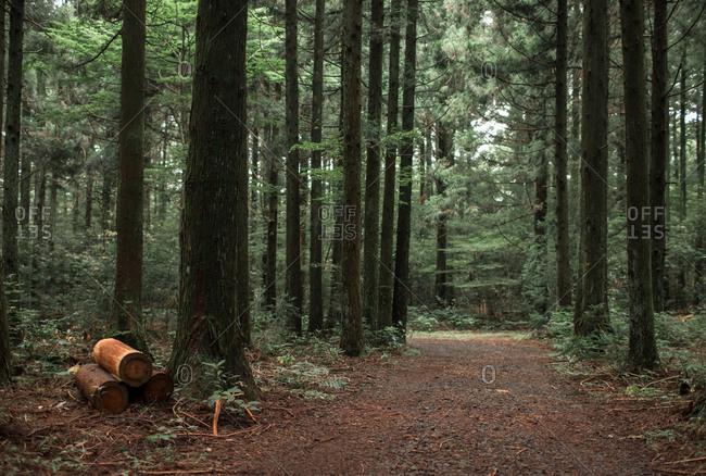 Morning in dense forest on Hallasan Mountain, Jeju Island, Korea