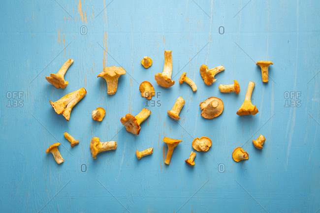 Overhead view of forest chanterelles mushrooms