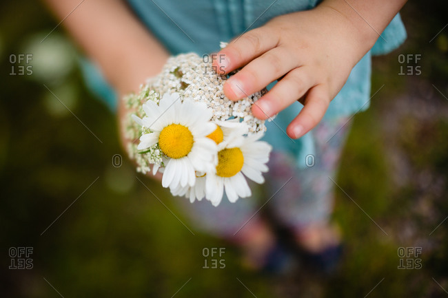 Childs hands holding small bouquet of fresh wildflowers