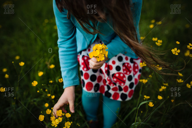 Close up of a young girl picking a bouquet of yellow wildflowers