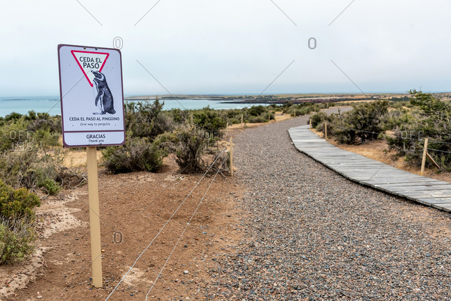 November 11, 2019: Magellanic Penguin colony of Punta Tombo. Patagonia, Argentina