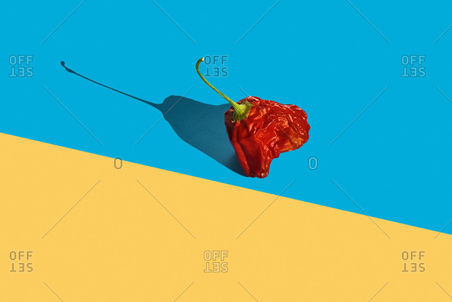 A stale red pepper on a blue and yellow background with some blank space