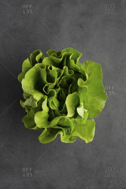 Butter lettuce, Iceberg lettuce, Cos lettuce