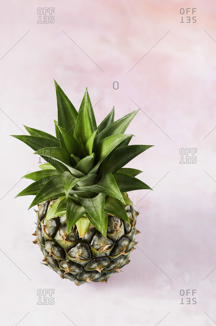 A small pineapple shot on a pale pink textured surface. View from the top showcases the crown of the freshly picked pineapple.