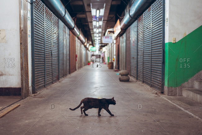 Black cat walking across empty narrow paved underground passage with closed metal shutters in city