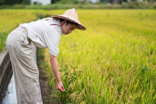 Side view of Asian female in cone hat cultivating rice field in countryside in summer
