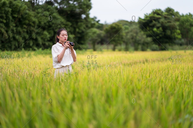 Delighted Asian female in summer wear standing in rice field and taking pictures on vintage photo camera