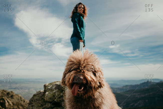 Cute furry Labradoodle with sticking out tongue standing near woman in Puerto de la Morcuera mountains on cloudy day in Spain
