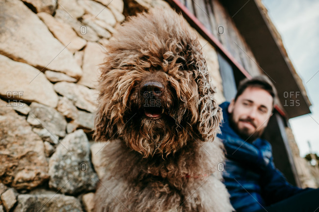 Furry Labradoodle standing looking at camera with blurred bearded man sitting near stone wall of house during trip in Puerto de la Morcuera, Spain