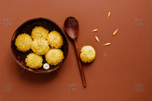 From above of buds of yellow chrysanthemum flowers in wooden bowl arranged with spoon and petals on brown background in studio