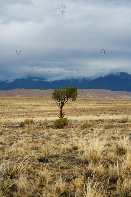 Picturesque view of lonely green tree growing in dry meadow on background of mountain range on cloudy day in USA