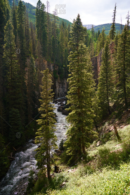 Picturesque view of fast river surrounded by coniferous forest in highland area in USA