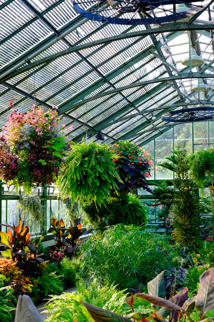 A plethora of tropical plant and flower textures in a greenhouse