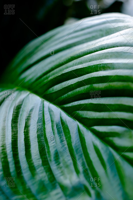 A green tropical leafy plant close up