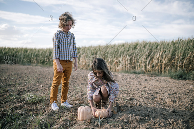 Brothers picking pumpkins from the ground in front of a cornfield