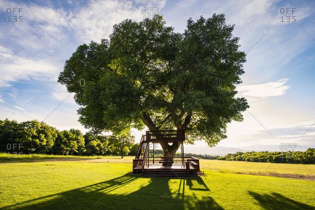 USA, Utah, Salem, Big tree with wooden tree house