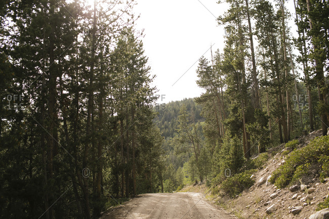 USA, Utah, Uninta Wasatch Cache National Forest, Dirt road in forest, Wasatch-Cache National Forest