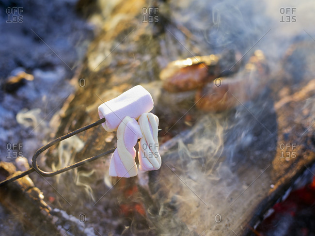Pierced marshmallows over a campfire