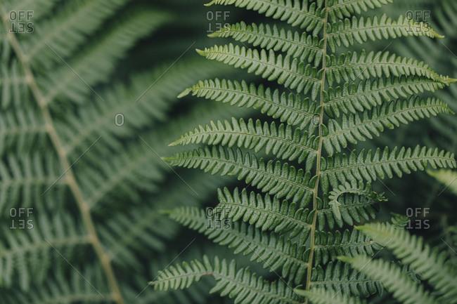 Close up of wild fern