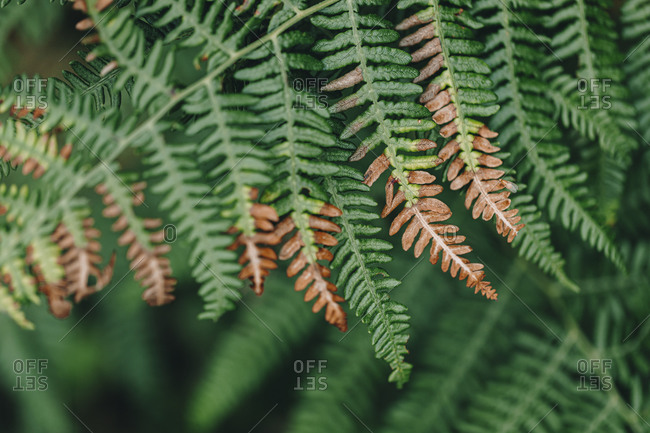 Brown and green wild fern